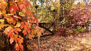 Fall in cottage country. Photo by: Liz Duerksen.
