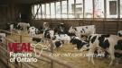 f2f veal farmers