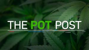 The Pot Post newsletter