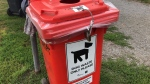 Doggie doo must be flushed down the toilet or thrown into one of these bins for treatment