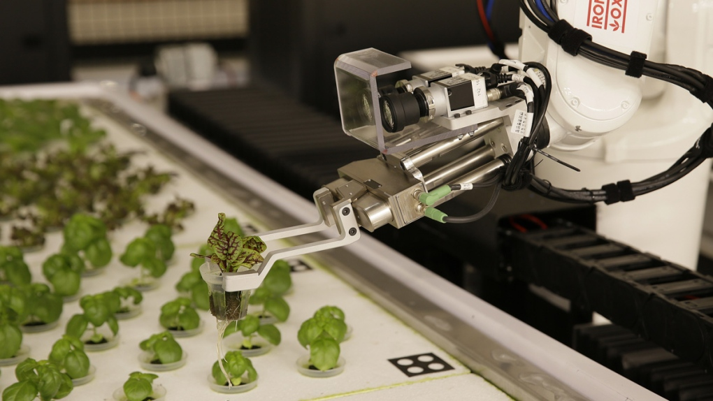 A robotic arm lifts plants at Iron Ox