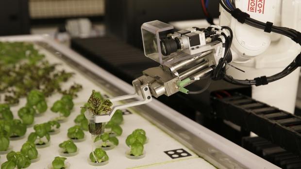 A robotic arm lifts plants at Iron Ox
