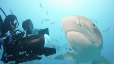 Director Rob Stewart films a lemon shark