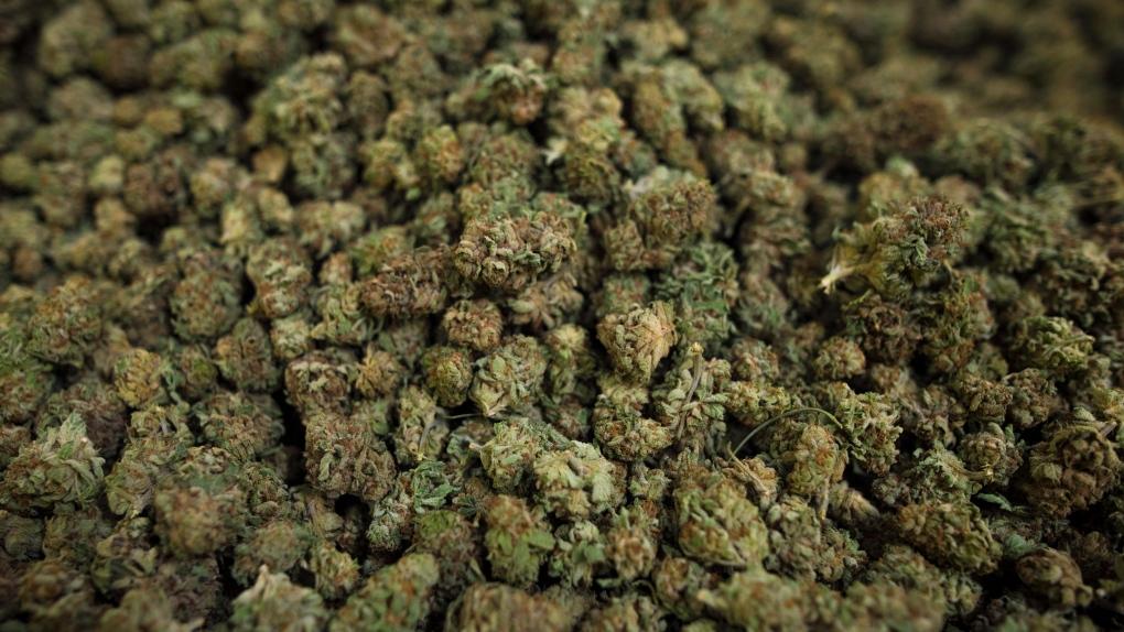 Cannabis C.D. Howe