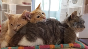 An SPCA branch in Penticton, B.C., was forced to close temporarily last week after receiving more 111 cats and kittens from a single owner. (Facebook/bcspca.southok)