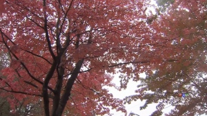 Thousands snap photos of fall colours