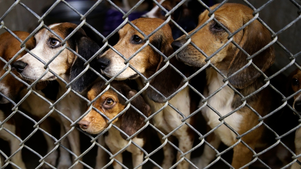 The Lehigh County Humane Society