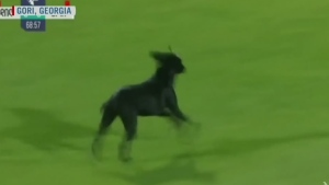 Trending: Dog on the soccer pitch