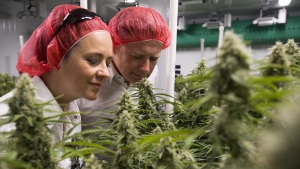 Blissco Cannabis Corp. CEO and founder Damian Kettlewell and wife Charlene are pictured in the companies main growing room in Langley, B.C., on Oct. 9, 2018. (Jonathan Hayward / THE CANADIAN PRESS)