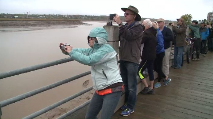 A crowd of tourists who gathered to watch the tidal bore got an extra show as Antony Colas surfed the bore on the Petitcodiac River in Moncton.
