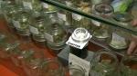 Benefits and risks of medical marijuana