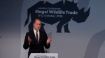 Prince William gestures as he makes a speech at the Illegal Wildlife Trade Conference in London, Thursday, Oct. 11, 2018. (AP Photo/Alastair Grant, Pool)