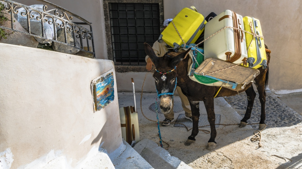 Greece has imposed a weight limit for donkeys in Santorini which have been left crippled and injured from carrying overweight tourists and excess loads.