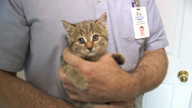 Rescued kitten finds forever home