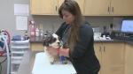 Allison Jones, registered vet tech