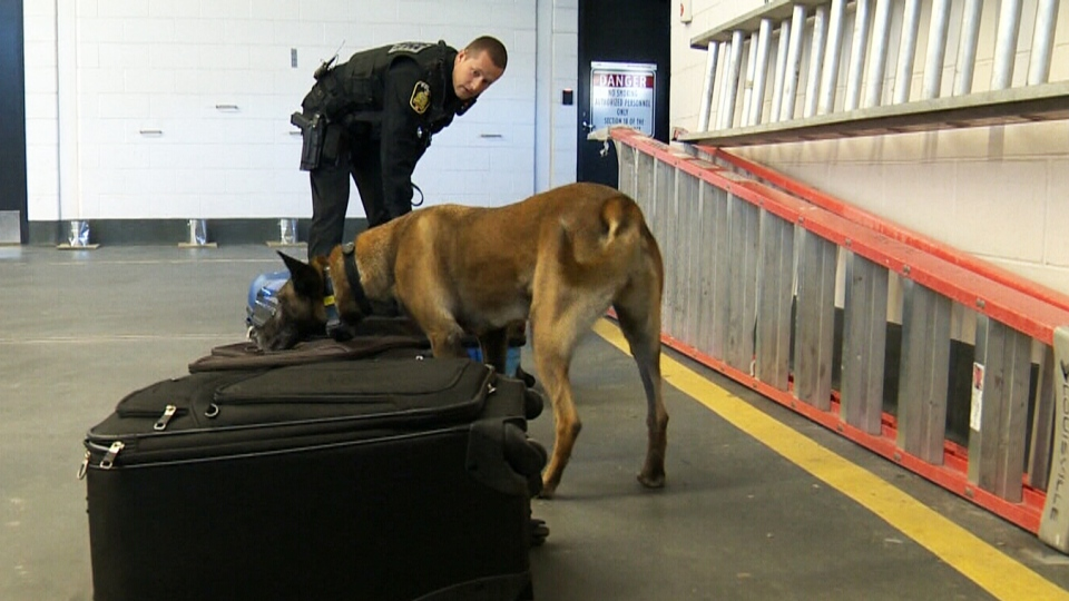 Const. Dan Papetti of the Winnipeg Police Service's K9 Unit trains with police dog Rane. (CTV Winnipeg)