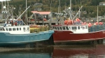 Lucrative lobster season kicks off in Alma, N.B.