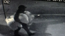 'Teddy bear bandit' robs Cali. flower shop