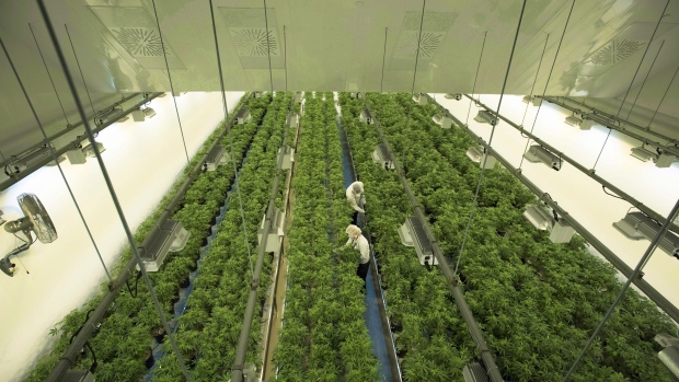 Marijuan growing facility in Smiths Falls, Ont.