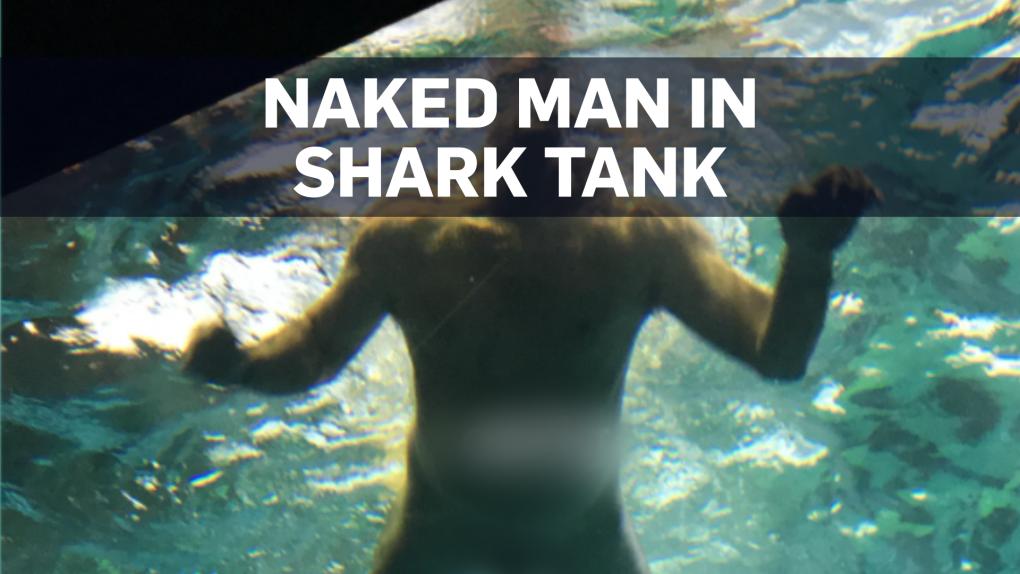 Naked man jumps into shark tank in Toronto | CTV News