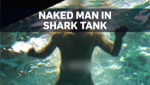 Naked man jumps into shark tank in Toronto