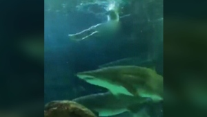Naked swimmer jumps in shark tank in Toronto