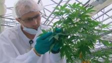 pot facility Niagara Region
