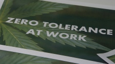 What are the workplace rules for cannabis?