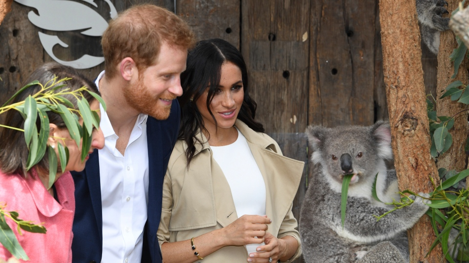 Prince Harry and Meghan, Duchess of Sussex meet Ruby a mother Koala who gave birth to koala joey Meghan, named after Her Royal Highness, with a second joey named Harry after His Royal Highness during a visit to Taronga Zoo in Sydney, Australia, Tuesday, Oct. 16, 2018.  (Dean Lewins/Pool via AP)