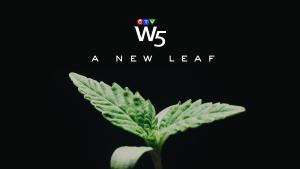 W5: A New Leaf