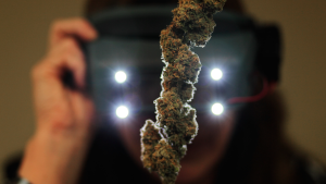 Colorado marijuana statistics image