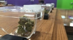 Cannabis at legal marijuana shop Eden just outside of Regina. (CALLY STEPHANOW/CTV REGINA)