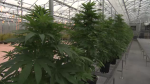 The WRPS announced its policy on pot for its officers.