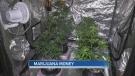 Marijuana money: Buying versus growing