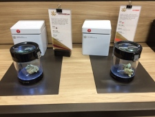 Cannabis on display at a Tweed location in Osborne