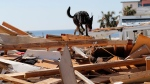 Toby, a search dog for the Boone County, Mo. Urban Search and Rescue team, sniffs through rubble in the aftermath of Hurricane Michael in Mexico Beach, Fla., Wednesday, Oct. 17, 2018. (AP / Gerald Herbert)