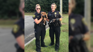 Ryder the gun sniffing puppy is seen here with Officer Edwards and Officer Allen. (Source: Greenville Police/Twitter)