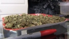 Business as usual for unlicensed pot dispensaries