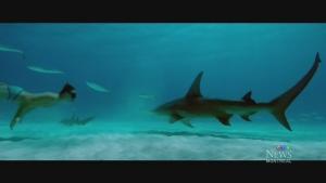 CTV Montreal: Sharkwater Extinction