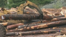 Port Alberni to get new sawmill, dozens of jobs