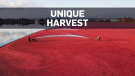 A look at Canada's cranberry harvest
