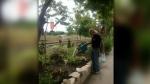 Community garden in Streetsville