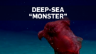 'Headless chicken monster' spotted off Antarctica