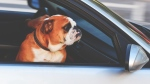 Elon Musk says the Tesla Model 3 will include a 'dog mode' allowing drivers to comfortably leave pets in their cars. (Tim Gouw / Pexels)