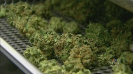 Gov't lays out pot rules for employees