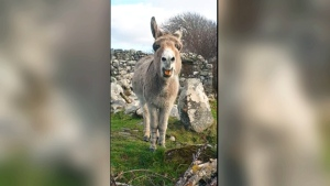 Extended: Harriet the 'singing' donkey
