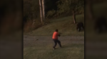 Conservation officers are investigating video of a hair-raising grizzly encounter in Bella Coola, B.C. (YouTube/J LM)