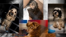 Dogs seized from Tyler Marshall