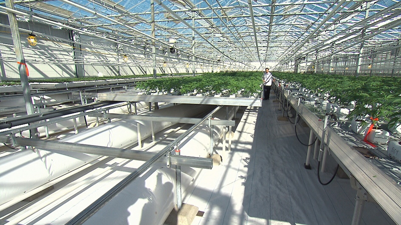 Many farmers in B.C.'s Lower Mainland are looking to cash in on the budding cannabis industry.