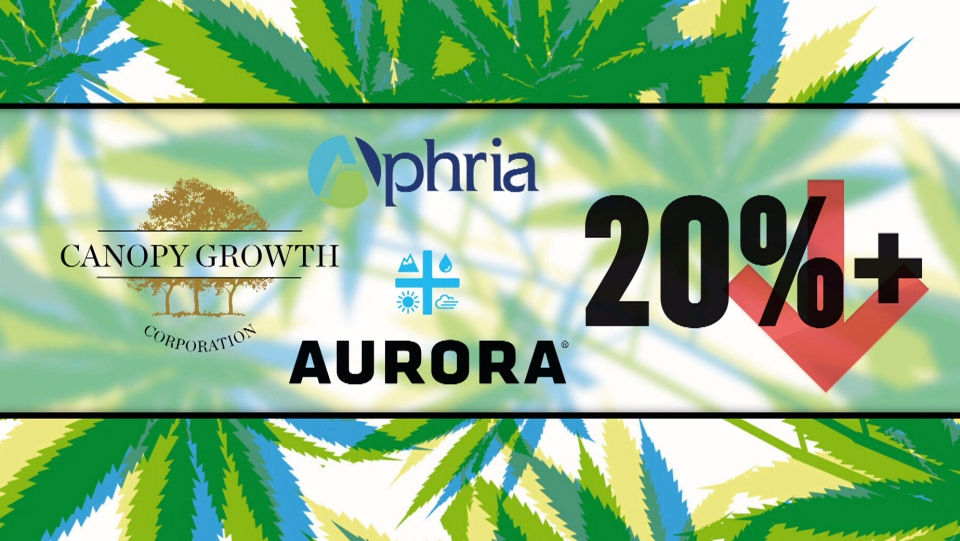 Shares in some of the biggest cannabis companies, such as Canopy, Aurora and Aphira, are all down more than 20 per cent. (CTV)